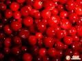 出口农产品---罐头类