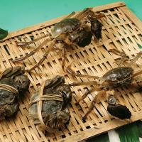 万年红大闸蟹公蟹4.8-5.4两母蟹3.6-3.8两4对礼券