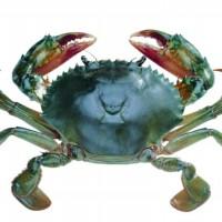 万年红大闸蟹公蟹5.5-6.2两母蟹3.9-4.2两4对礼券