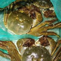 万年红大闸蟹公蟹4.4-4.7两母蟹3.3-3.5两5对礼券