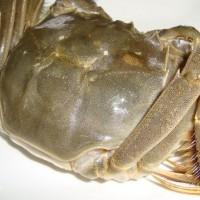 万年红大闸蟹公蟹4.4-4.7两母蟹3.3-3.5两5对礼盒