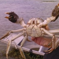 万年红大闸蟹公蟹4.8-5.4两母蟹3.6-3.8两5对礼券