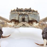 万年红大闸蟹公蟹4.8-5.4两母蟹3.6-3.8两5对礼盒