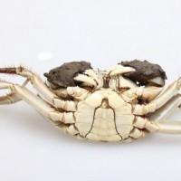 万年红大闸蟹公蟹3.9-4.3两母蟹2.9-3.2两5对礼盒