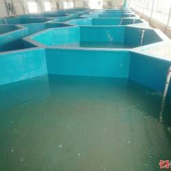 上海从锐   大型工厂化水产养殖     现代化循环水养殖系统
