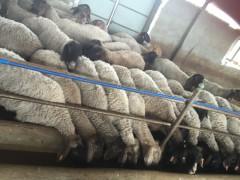 养殖基地一览,喀什畜牧业龙头企业,喀什知心食品