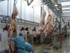 屠宰加工基地一览,喀什畜牧业龙头企业,喀什知心食品