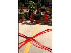 喀什香曲尔宏福花园店鞭炮声声庆开业